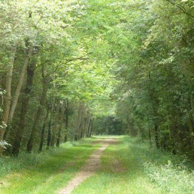 entre bois et prairies à Boisbriou